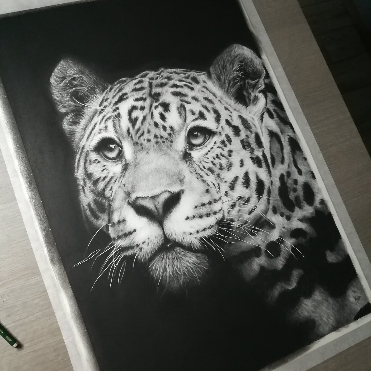 Maglm در توییتر Jaguar Commission Drawing Finished Fabercastell 9000 Graphite Pencils And Staemars Mars Lumograph Black 8b Pencil On Cansonpaper Moulin Du Roy Hot Pressed Paper 40x60cm Ref Pic From