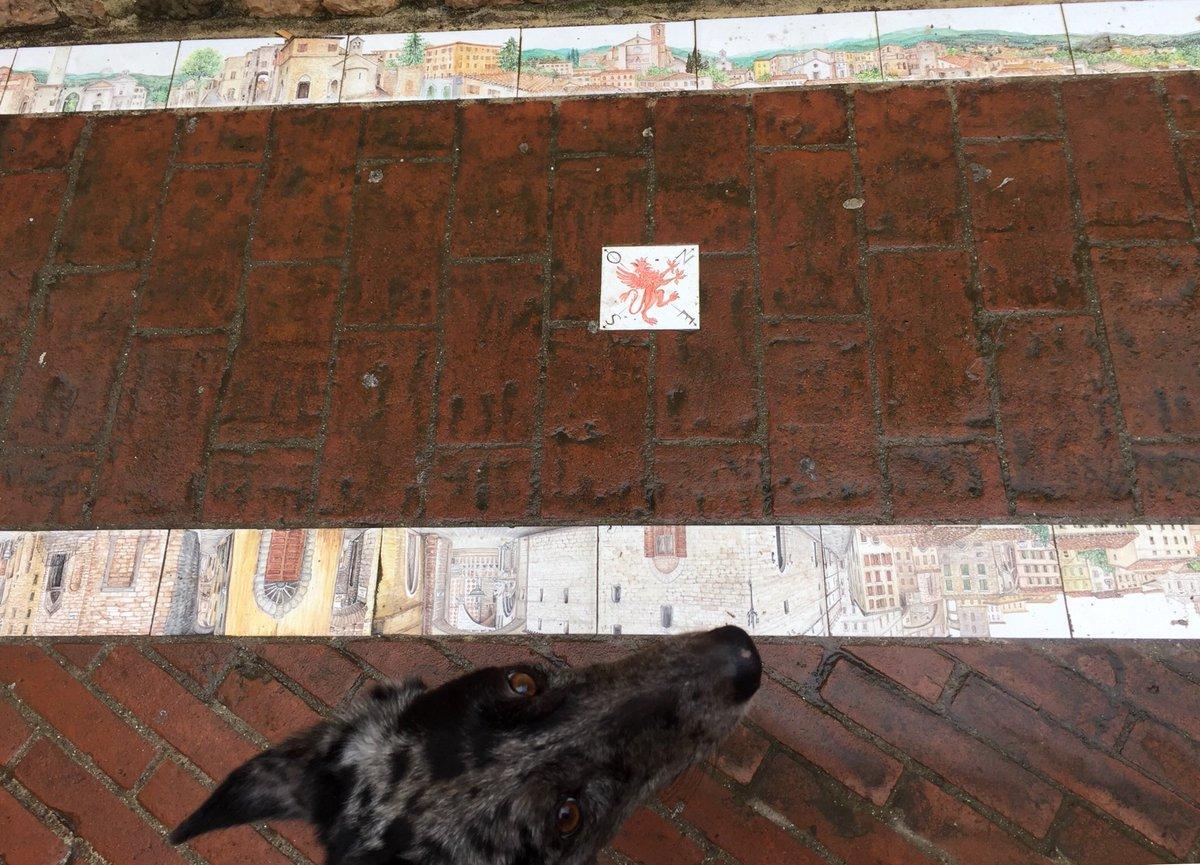 What Aria thinks of Il Grifo. #eyeroll #ariainitaly #perugia #perugiacentro #grifo #cityatmyfeet #walk #passeggiata https://t.co/HCC9sJWn9P