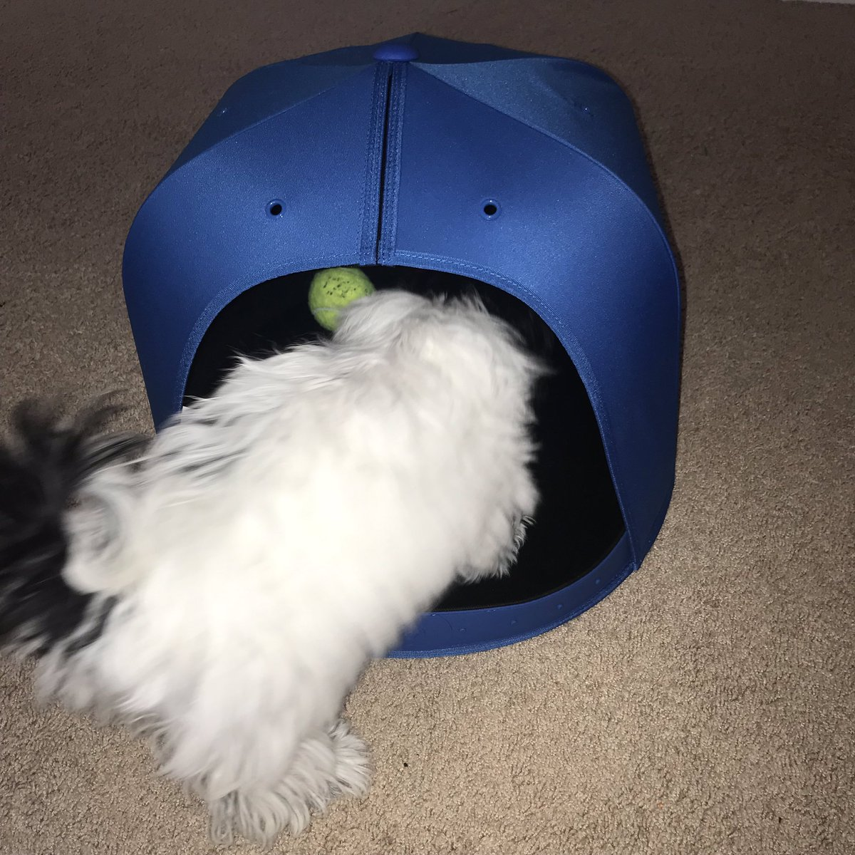 b3282f36f129bb ... my daughter's dog Pandora needed a NBA getaway and you know what she  loves it! Thanks @_napcap this is really a cool invention for pets. Yoda  approves!