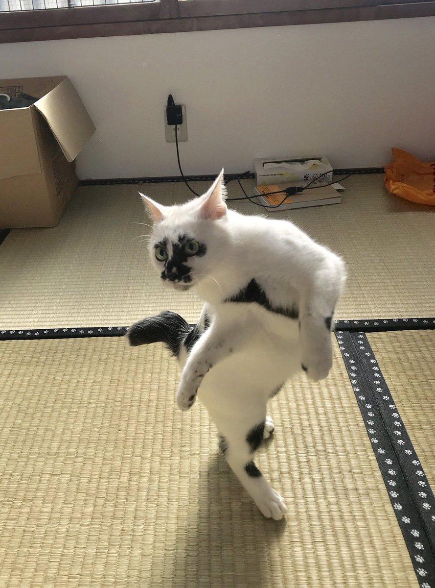 熱海 Muddy Catさんの投稿画像