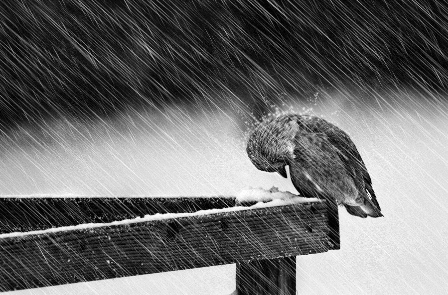 """""""You never know how strong you are,  until being strong is your only choice.""""                                                           ~Bob Marley  📷 by: © Mikael Sundberg """"Facing Elements, a Heavy Winter in Sweden"""""""