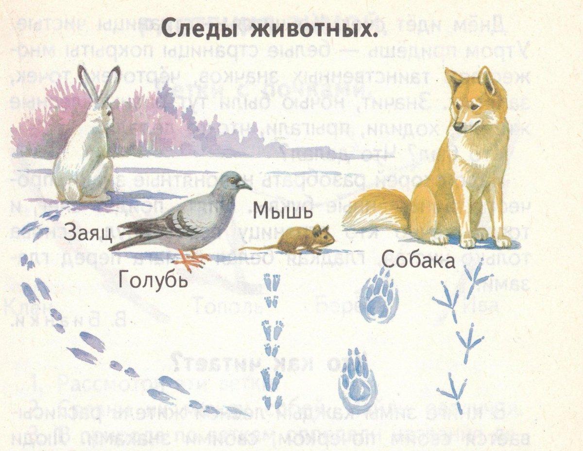 грыжа следы животных на снегу фото с названиями проблемы из-за