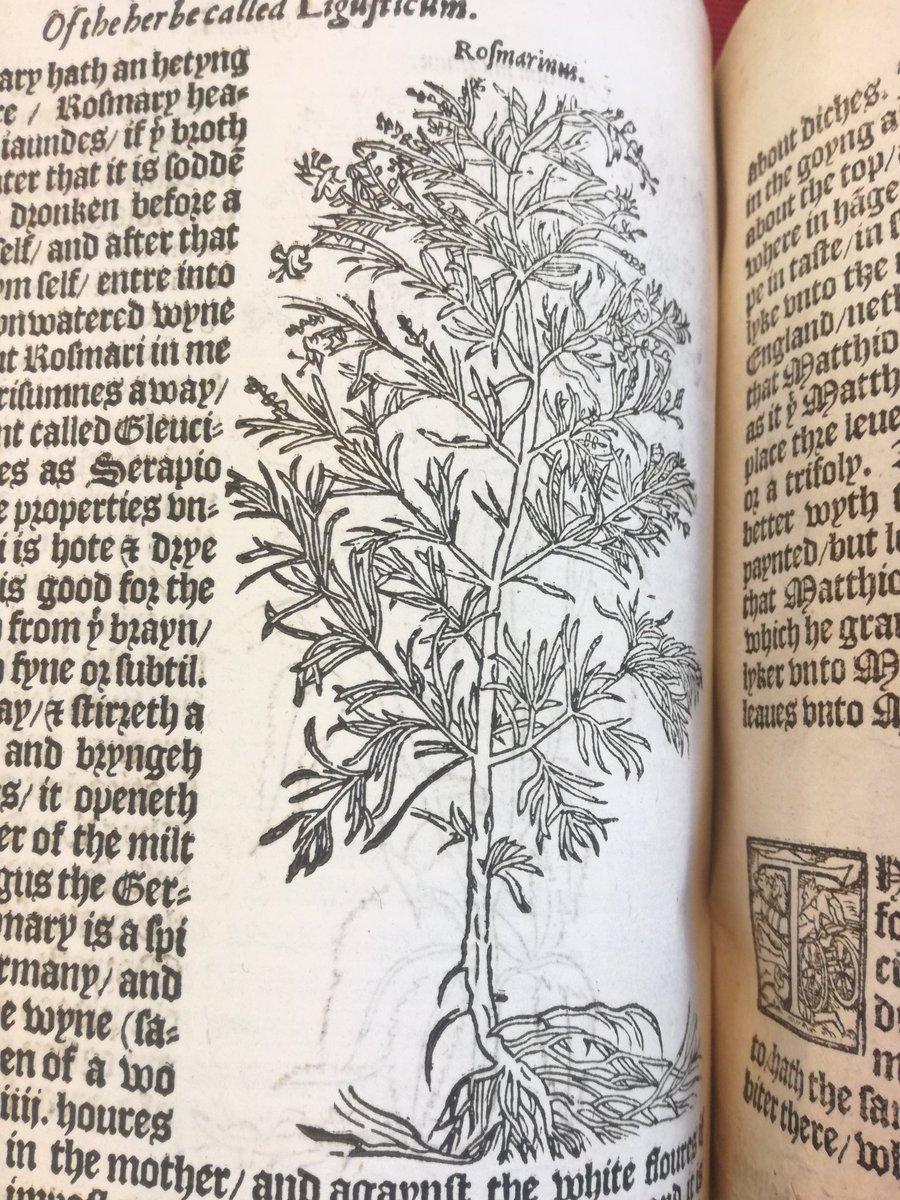 botanica, hashtag on Twitter