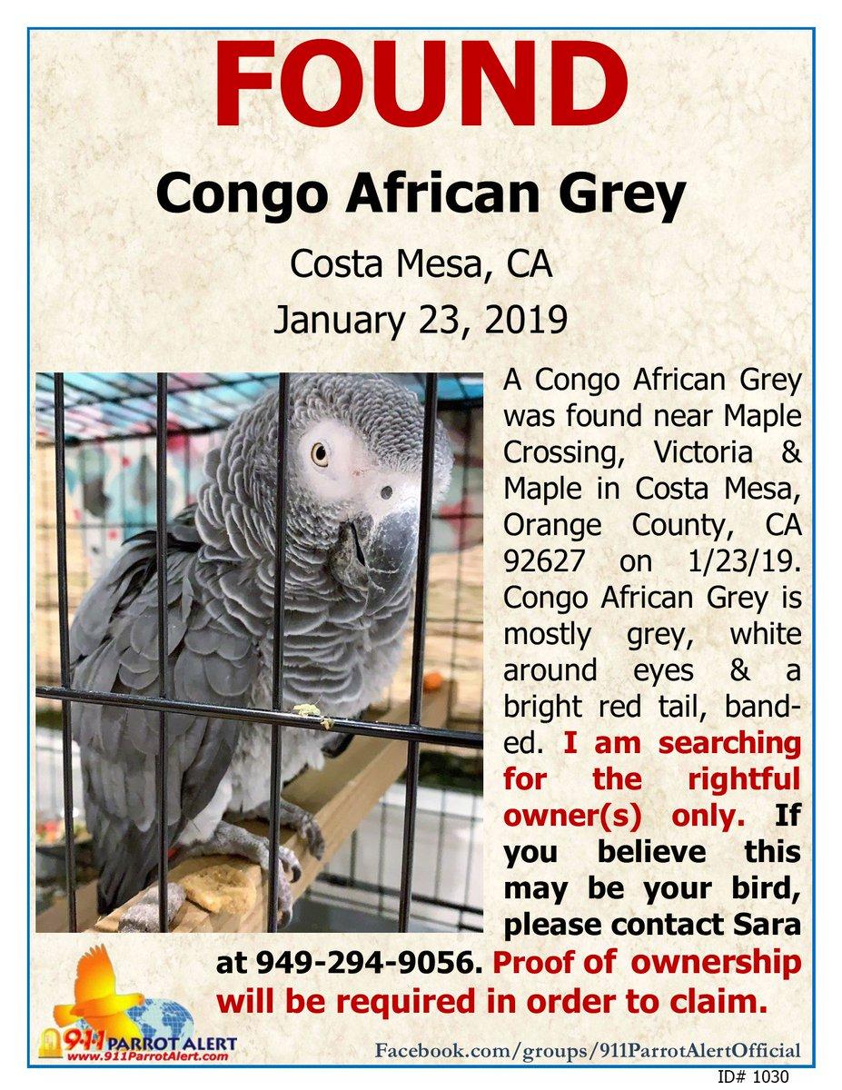 Found Parrot California