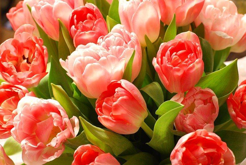 Открытки день рождения тюльпаны, картинки слово