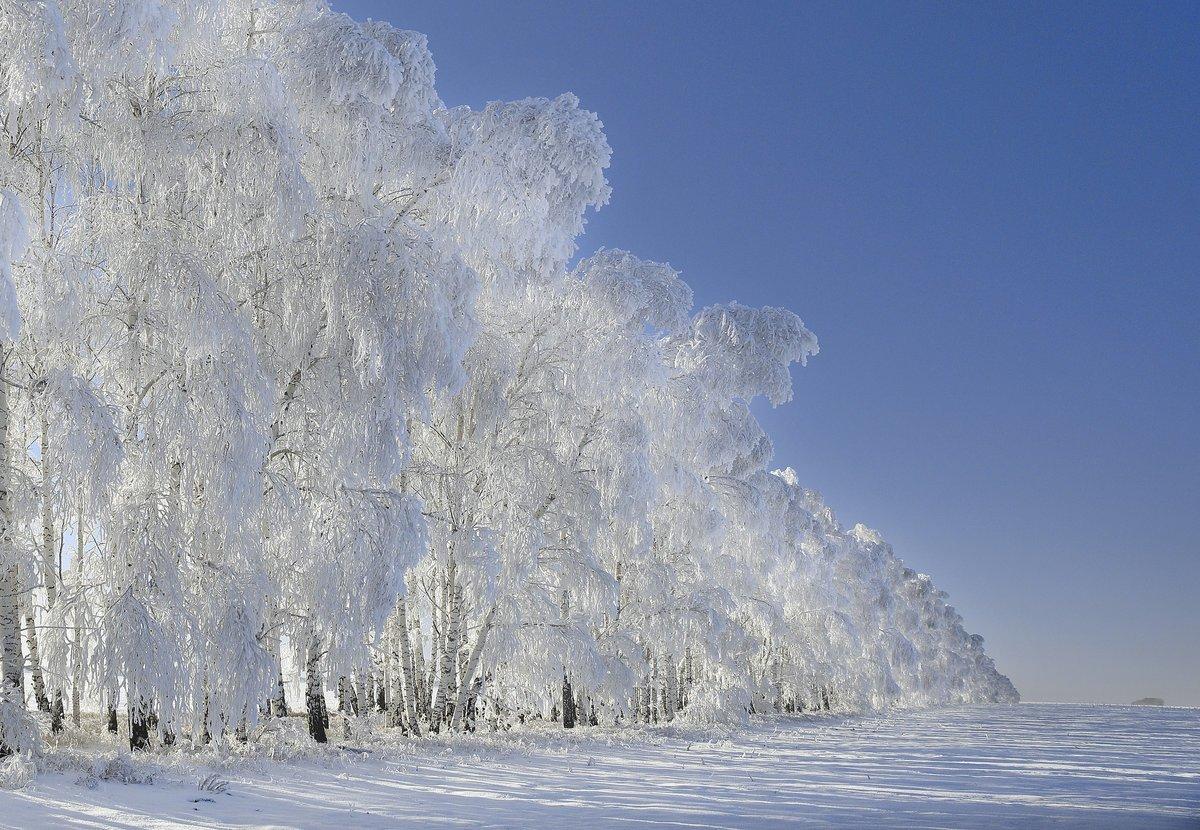 Зимняя березка картинки