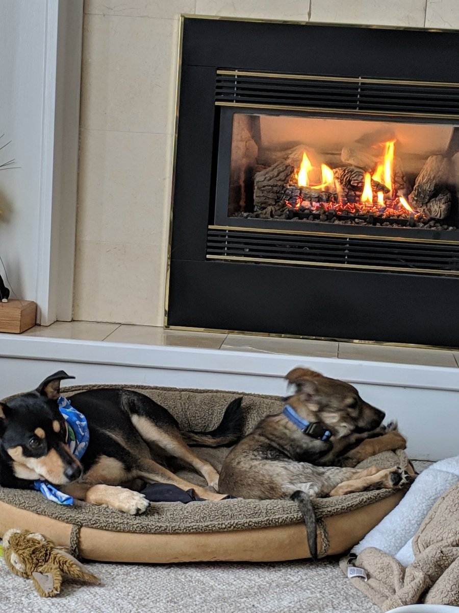@PascoSheriff Daddy, Mommy, Leila, Oreo and me all locked up in Iowa. Way  too cold to go outside so Leila and I guarding the fireplace. Woof!