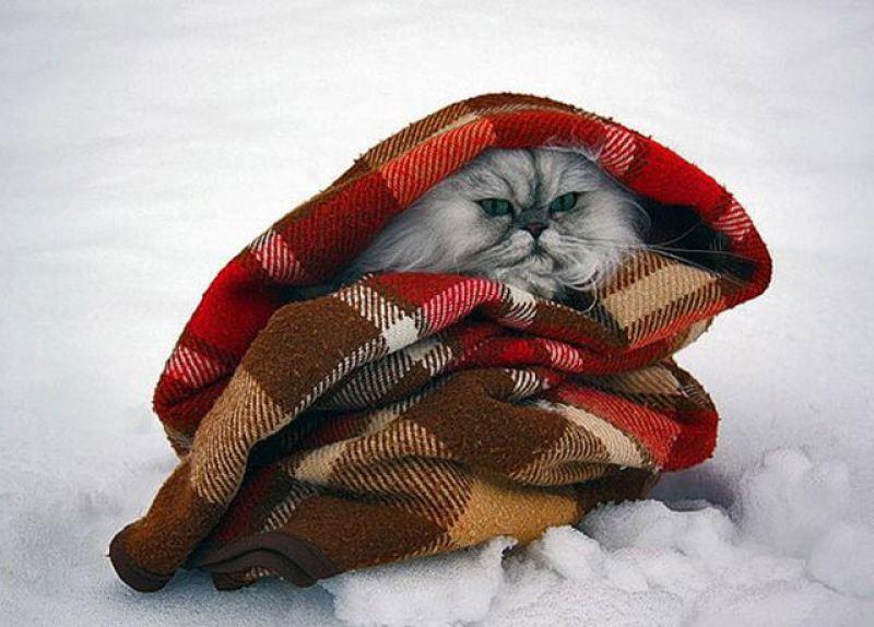 Открытка одевайся теплее на улице мороз, открытка марта своими