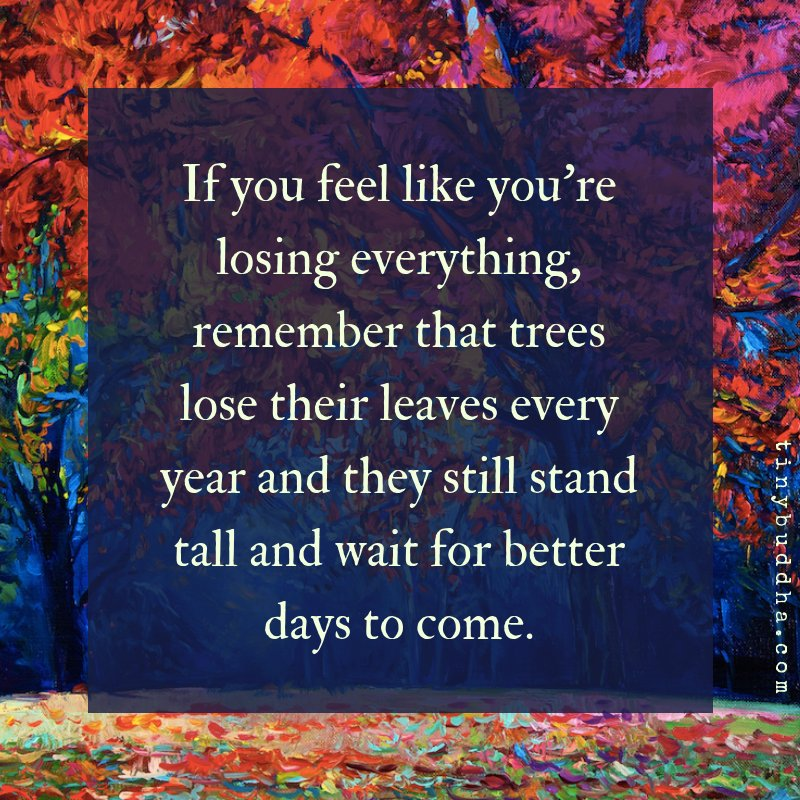 """Tiny Buddha on Twitter: """"If you feel like you're losing everything,  remember that trees lose their leaves every year and they still stand tall  and wait for better days to come.… https://t.co/57L1wABoN8"""""""