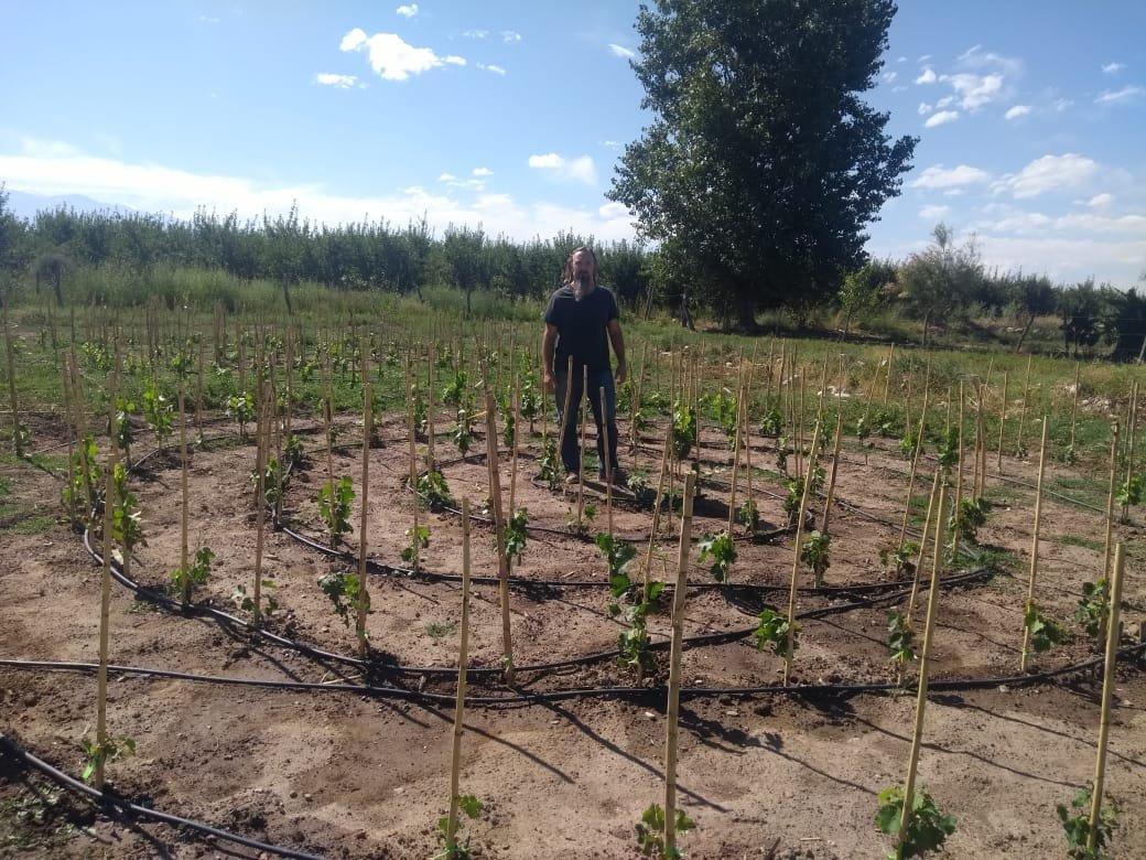 Así crece nuestro jardín ornamental en finca Los Cedros plantado con cabernet franc. 🌱