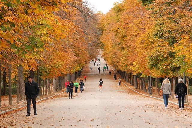 With a Green New Deal, maybe one day American cities could be filled with parks like Parque de El Retiro and the streets could look like Paseo de Cuba.  _ #madrid #madridspain #madridespaña #espana #humanityincities #parquedelretiro #parqueretiro #retiro… http://bit.ly/2tb4p8g pic.twitter.com/zZ6w3Y1n0s