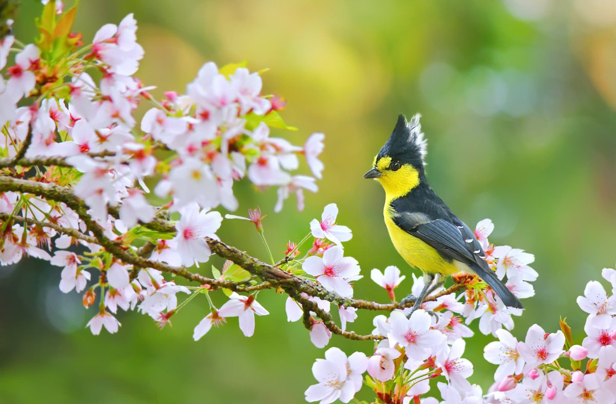 Let us be grateful to the people who make us happy; They are the charming gardeners who make our souls blossom.  Marcel Proust Pic Sue Hsu