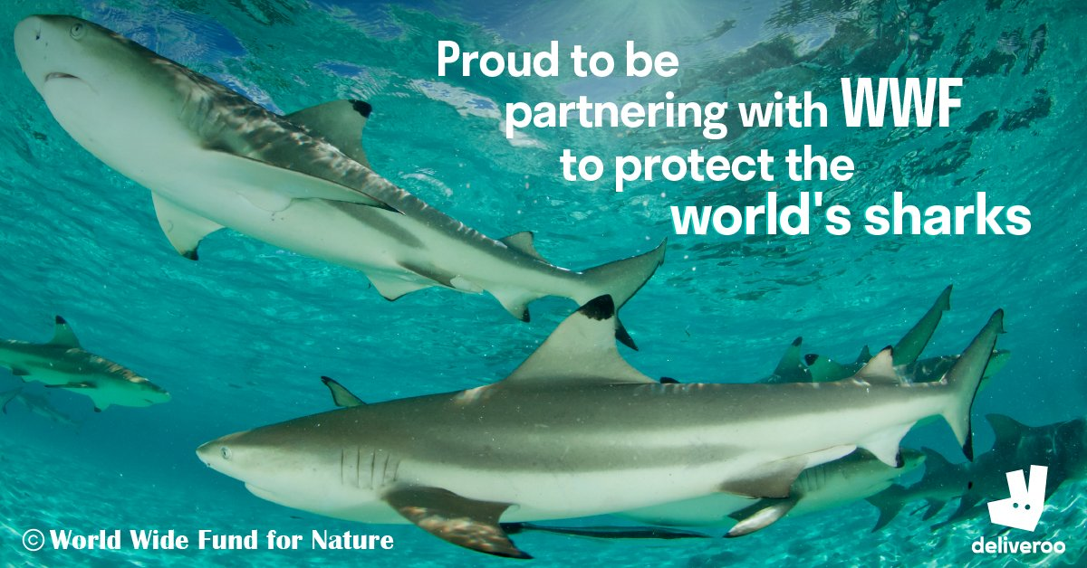 We're proud to be partnering with @WWF and signing up to the #NoSharkFin pledge – ensuring that there are no shark fin dishes on our platform globally.
