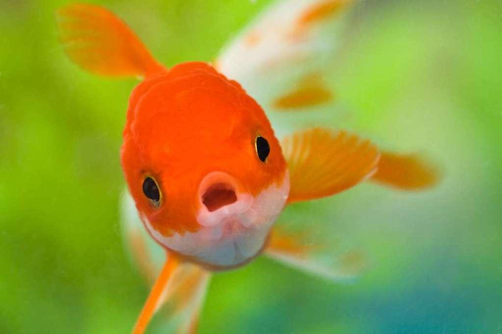 Смешные картинки рыбка, надписями для