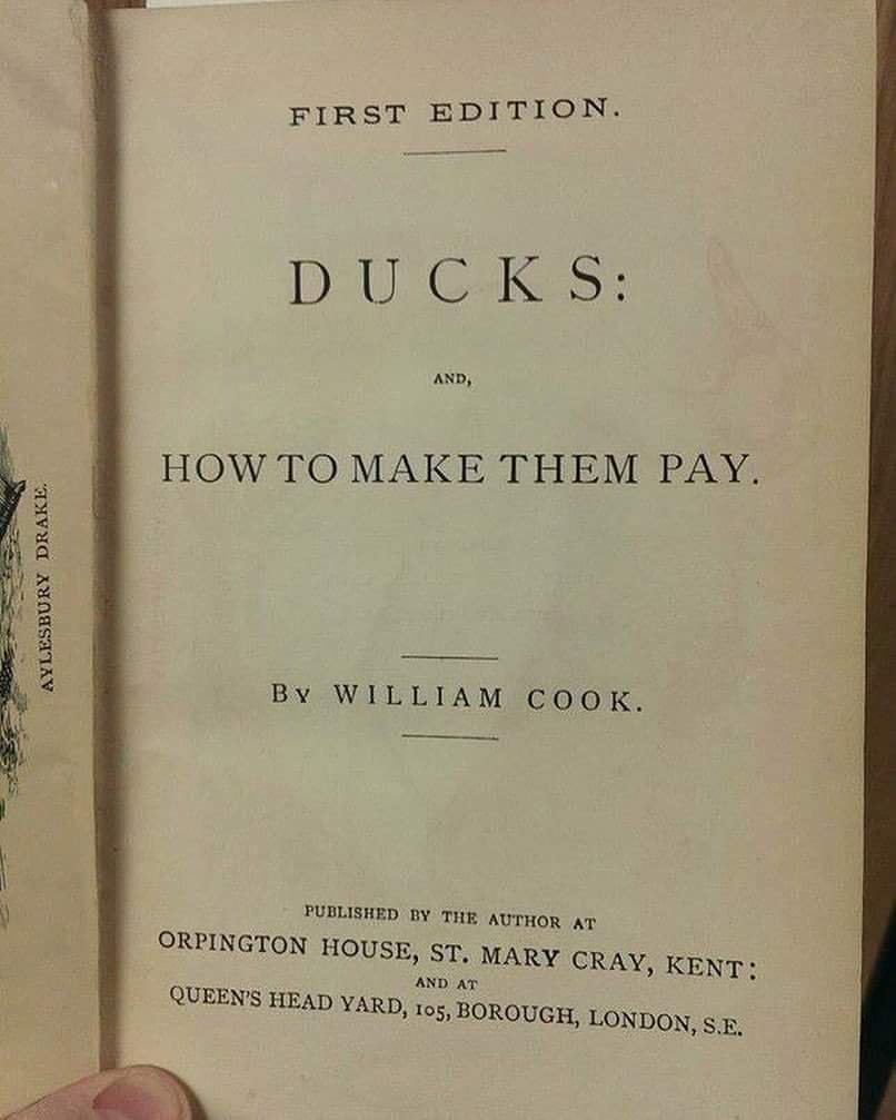 """Review: """"Let me tell you I was bitterly disappointed to learn that this book is, in fact, an instructional guide to the profitable husbandry of ducks as a craft. There is not one sliver of insight about holding ducks accountable for their crimes against humanity, Earth or God."""""""