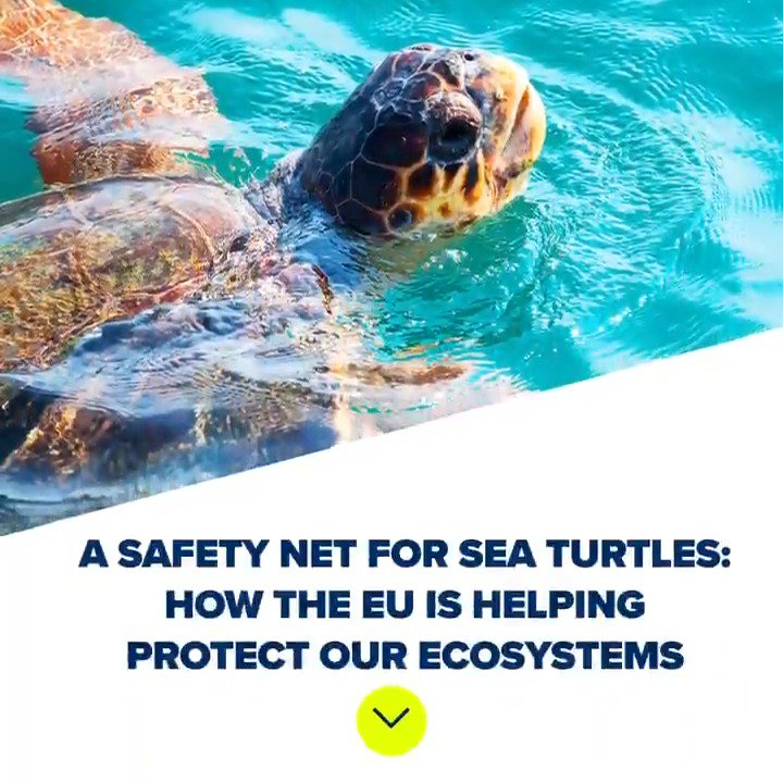 Why are 🌊researchers suggesting using LED 💡in fishing nets in the Mediterranean? To help mitigate sea turtle capture in fishing nets. These scientists are part of our Life Euroturtle project, helping conserve the species: https://europa.eu/!PV47TP #EUprotects