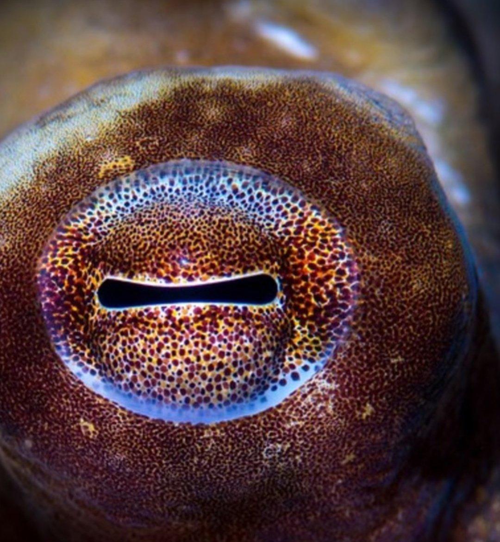 картинки осьминога глаза получить