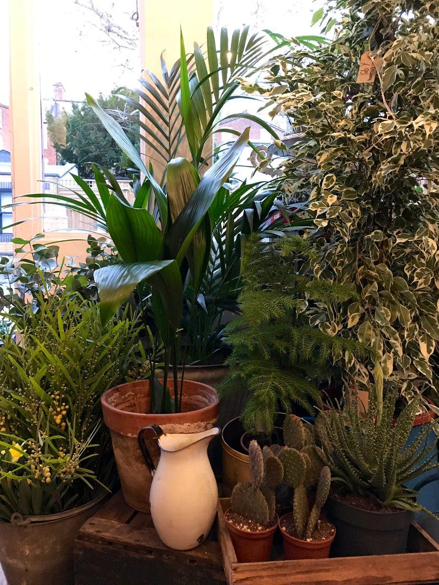 Springinourstep Whampers Nw6 Shoplocal Loveplants Nottinghill Golborne Pictwitter H5zi95pqIB