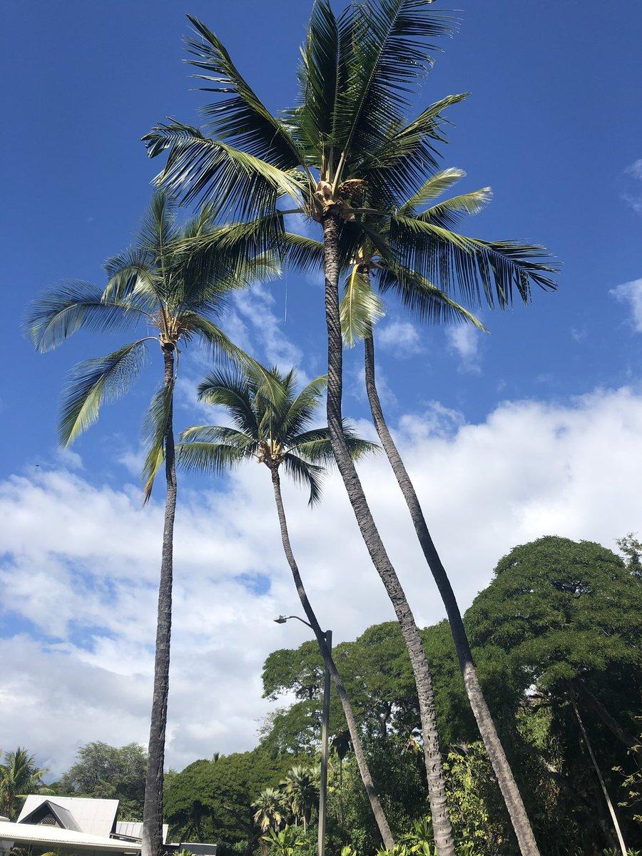 ハワイ 島 コナ 天気