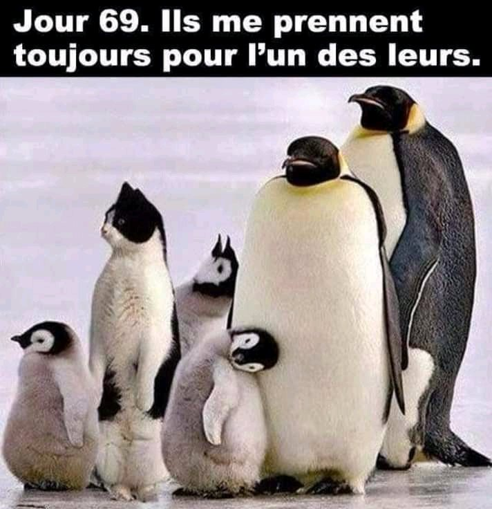 Animaux Droles Animauxdr0les Twitter