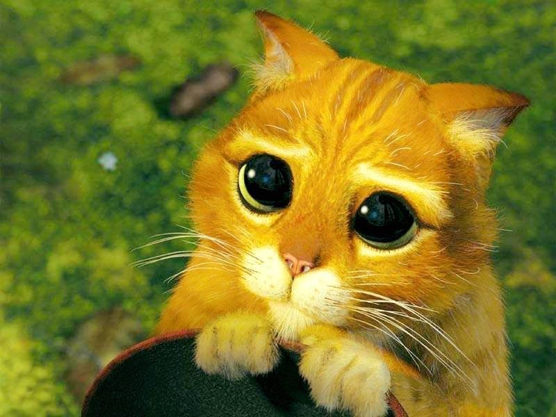 Картинки пожалуйста кошки