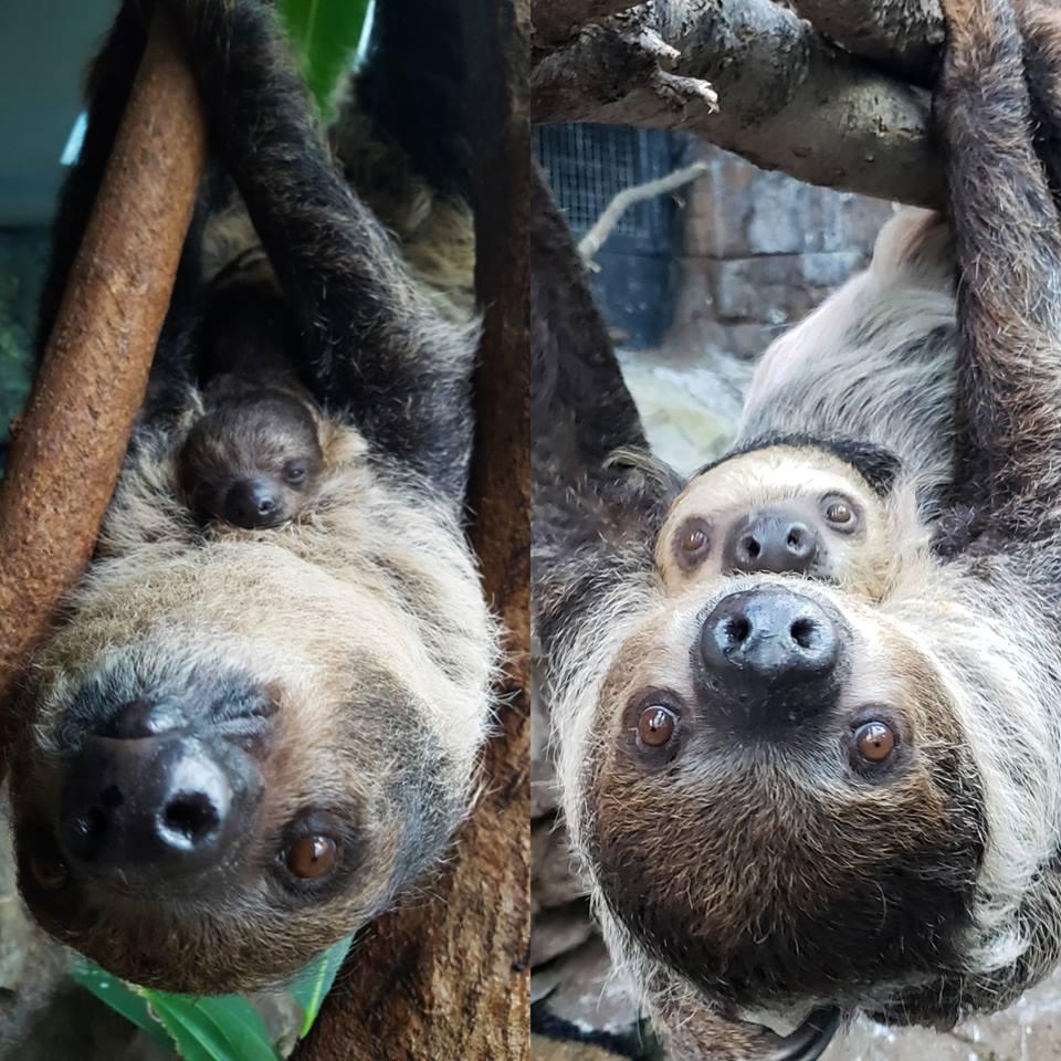 The Denver Zoo : Latest News, Breaking News Headlines
