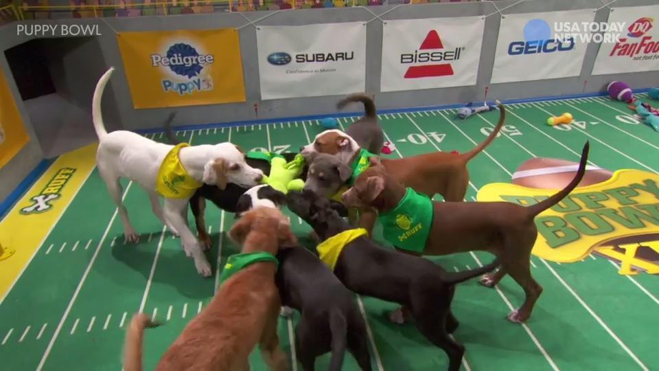 <애니멀 플래닛>에서 진행하는 Puppy Bowl은 Super Bowl에서 따온 프로그램으로, 경기랄 것도 없고 그냥 강아지들이 장난감을 갖고 마음껏 노는... 말 그대로 개판...
