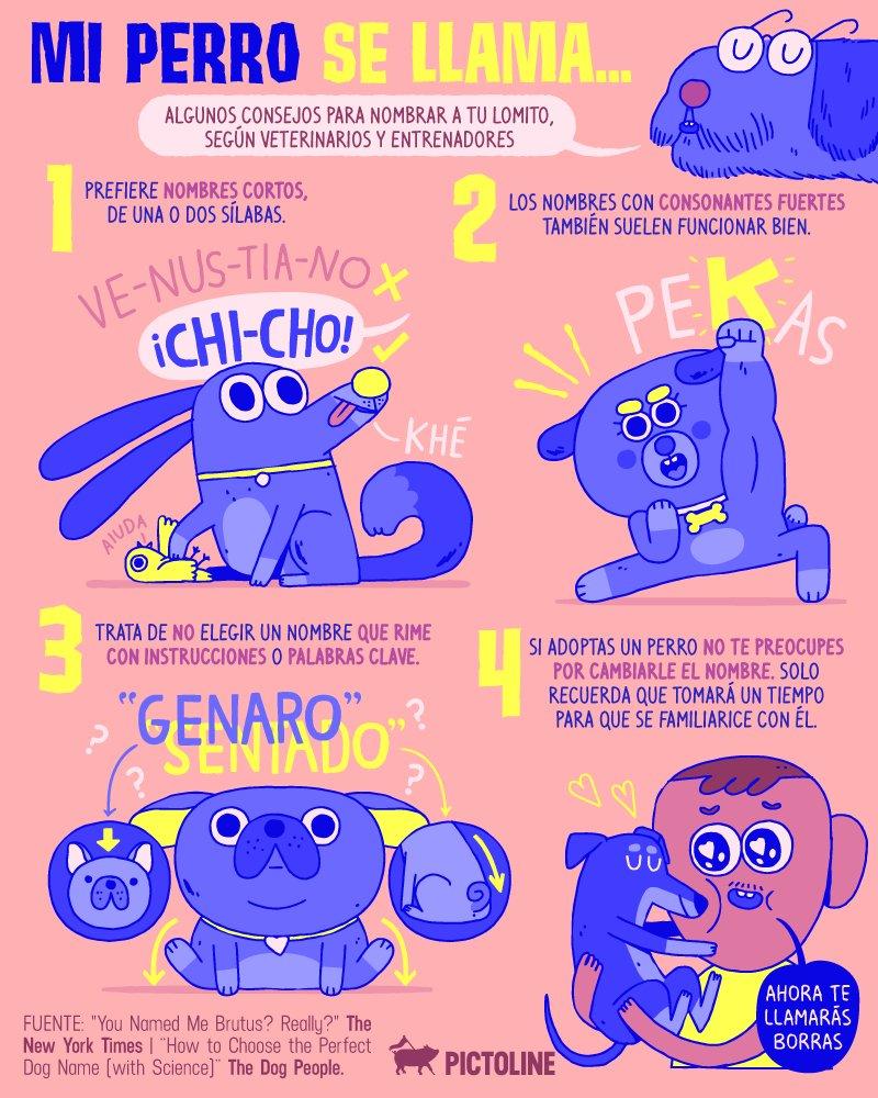 Consejos para poner nombre a tu perro