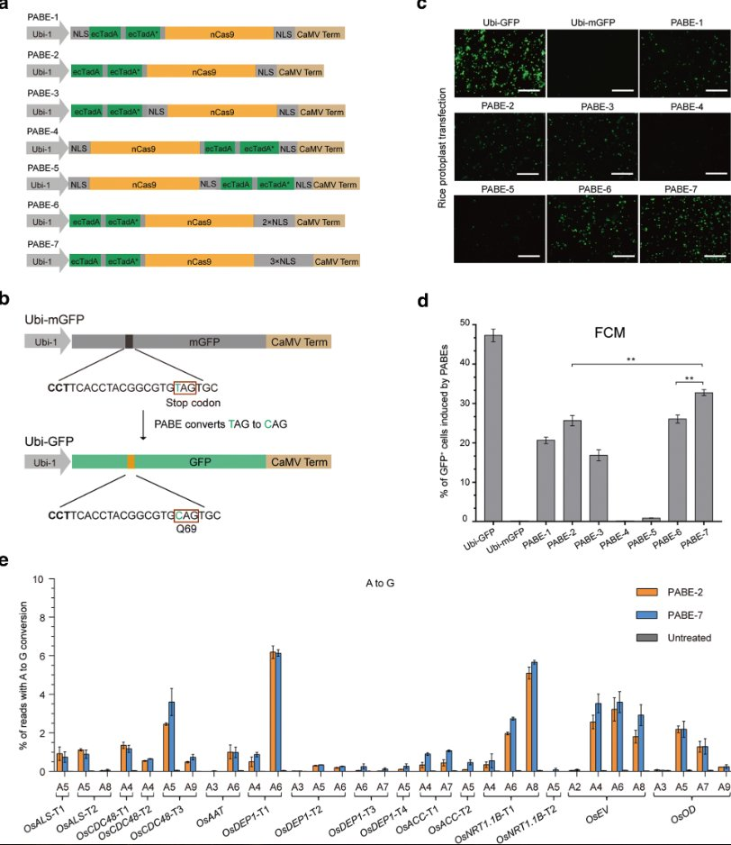 Addgene On Twitter New Plasmids From The Lab Of Caixia Gao