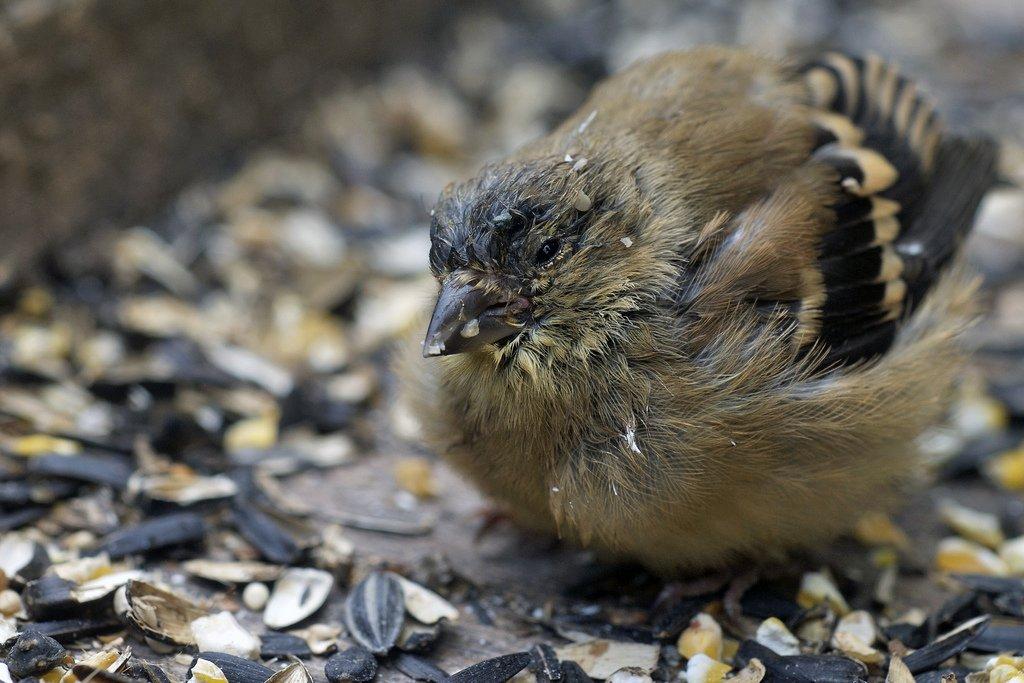 Media Tweets by Garden Wildlife Health (@wildlife_health