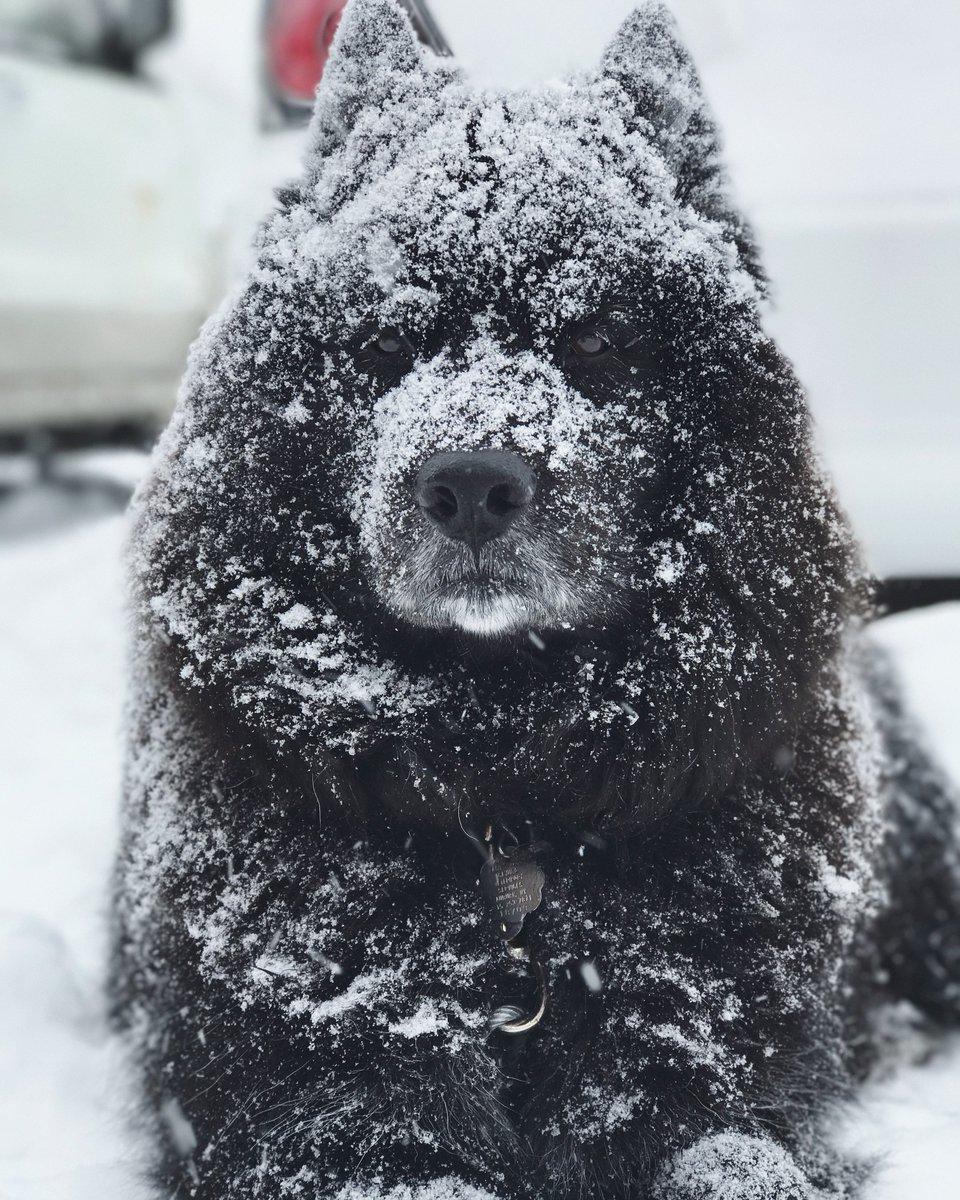 Enjoying the snow (photo)