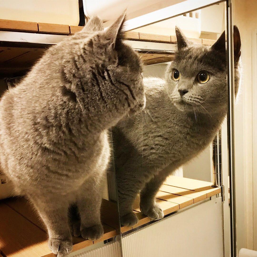 今日も決まった二ャ🐱 #猫好きさんと繋がりたい #猫のいる暮らし #猫のいる生活