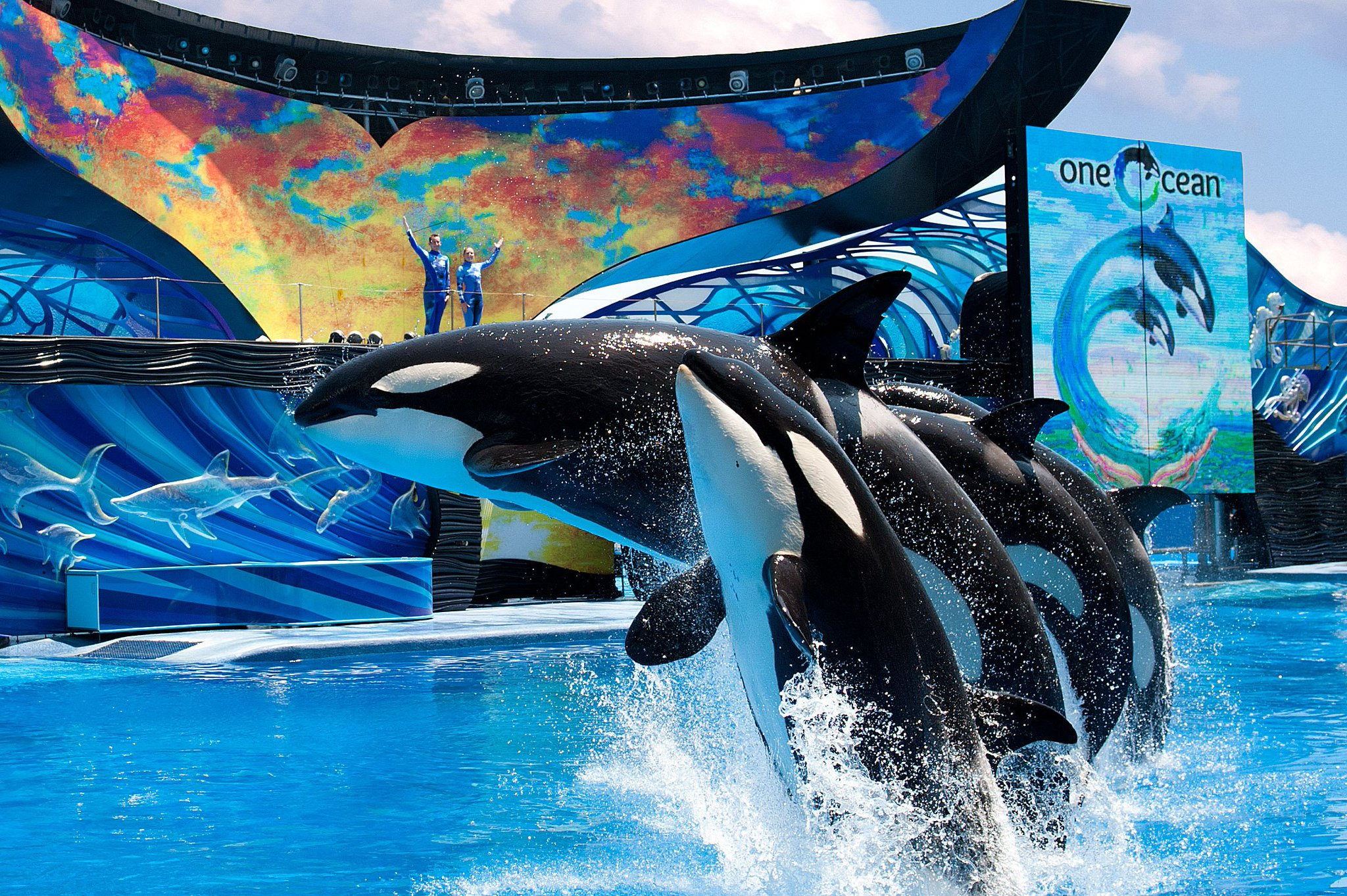 Image result for seaworld orlando shamu