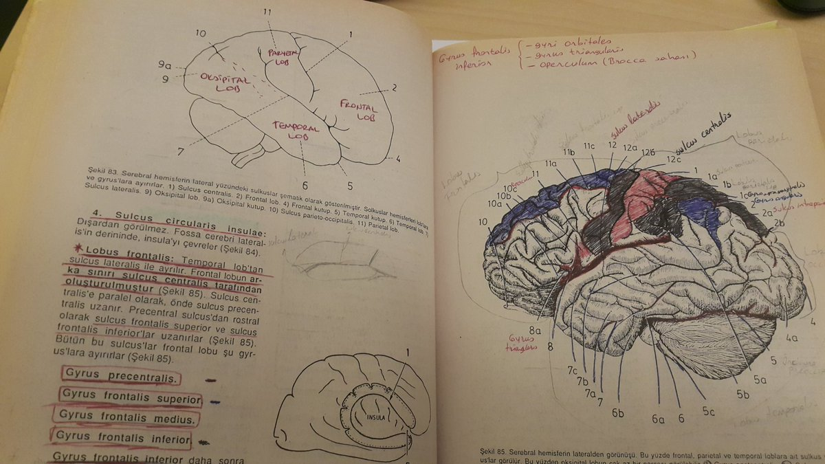 Ben de sorgular oldum lob sayılarını son zamanlarda :) 1998 yılında çalışmışım en son... soru sayesinde en sevdiğim kitabıma bir daha baktım. #nöroanatomi #fahridere #çukurova #tıp