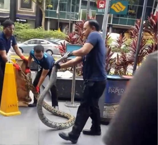 #snakesonaplane?! That's so last year. How about #snakeswhileshopping.  Went shopping on #Singapore's Orchard Road and… #lifeinAsia #snakeunderthebench #snakesinamall #Tang #shopping #python  #pythonbag? Try, python in a bag.   Video: https://www.facebook.com/MothershipSG/videos/385904621978971/ …pic.twitter.com/BBqJDVmdag