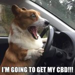 Image for the Tweet beginning: Go get your CBD today!
