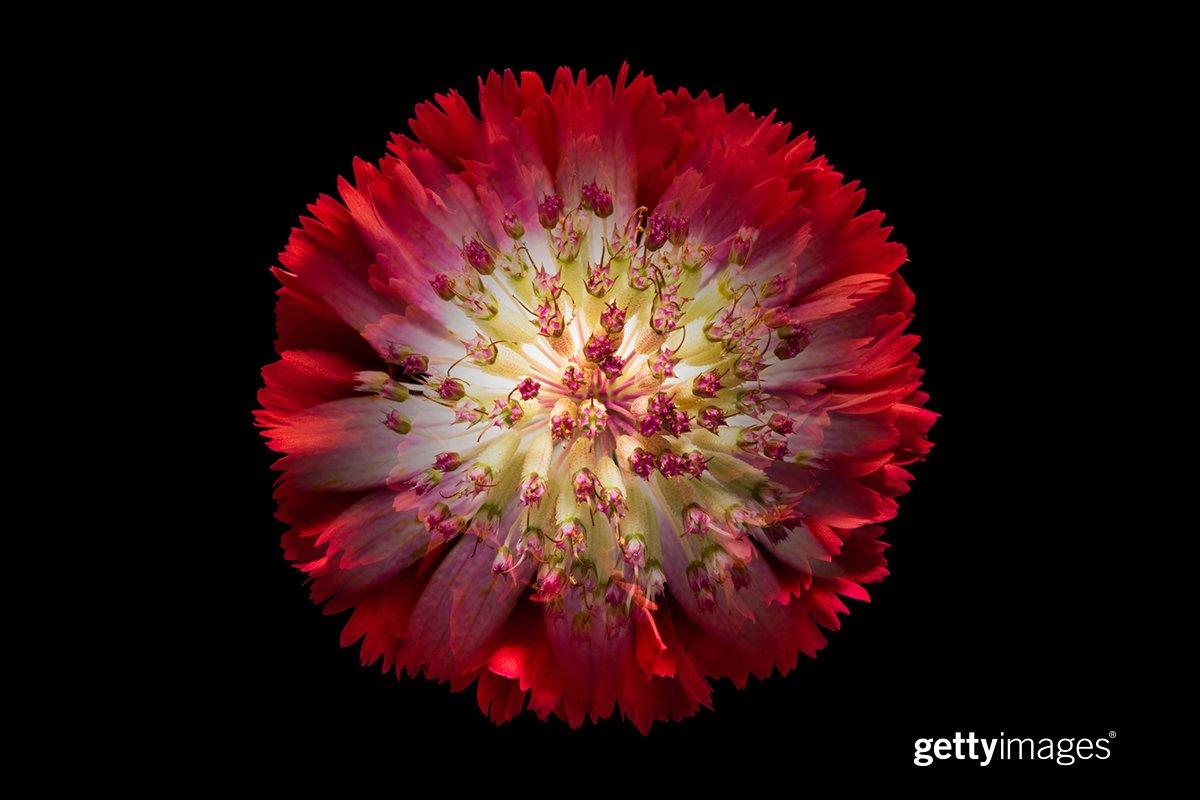 In full bloom 📷:MirageC, #923200704