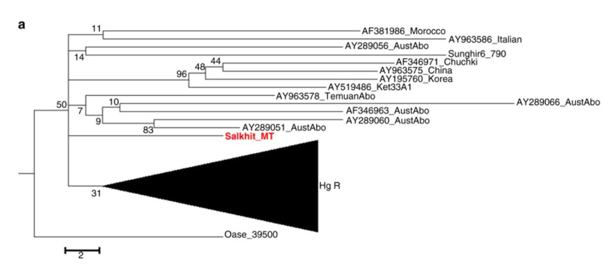 Compound-specific radiocarbon dating and mitochondrial DNA analysis of the Pleistocene hominin from Salkhit Mongolia https://www.nature.com/articles/s41467-018-08018-8…