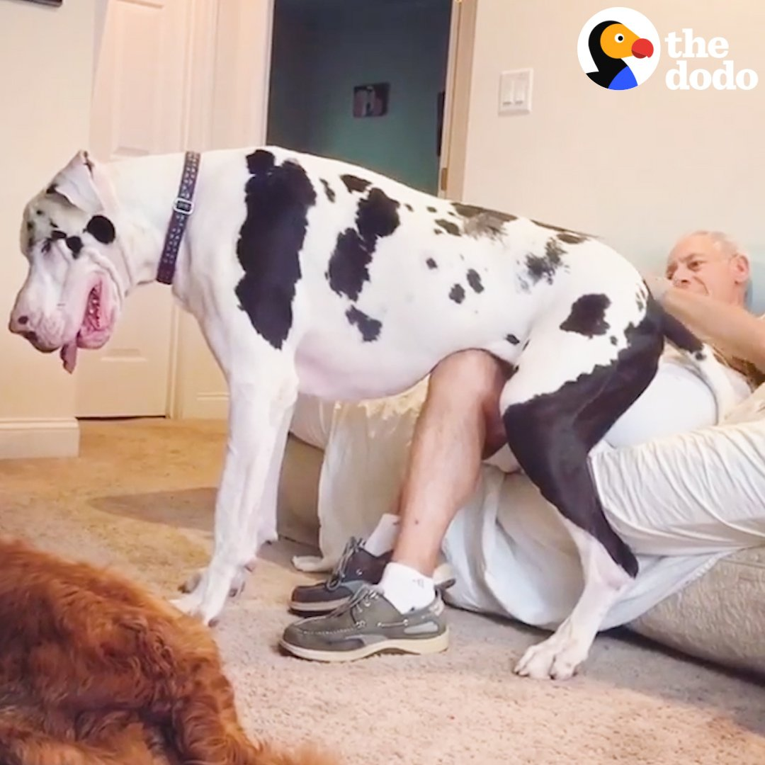 Five Reasons Big Dogs Are Simply The BEST 💜💜💜