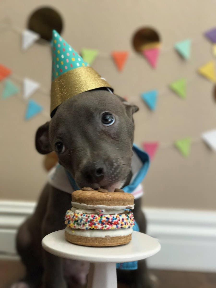 светодиодную люстру картинки с собачками с днем рождения смешные протяжении многих