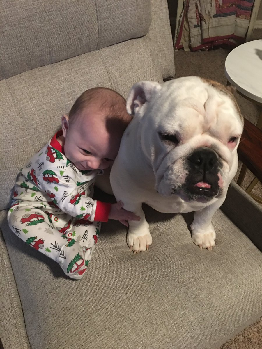 Christine Teigen On Twitter No Dog Like A Bulldog