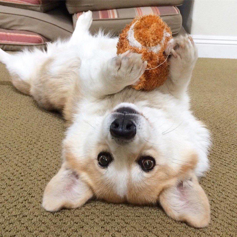 Картинки красивые собачки милота