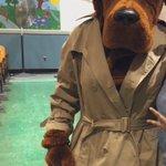 Image for the Tweet beginning: Yes McGruff the Crime Dog