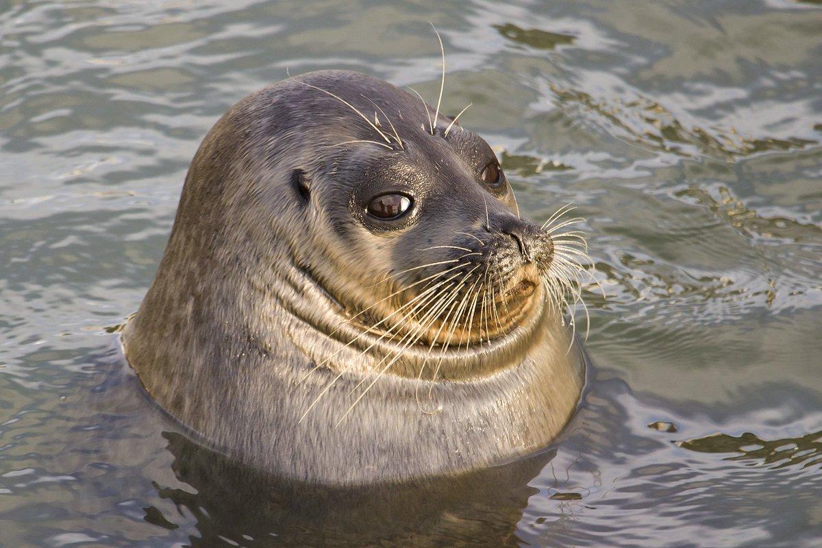 покажи картинки морских котиков уже