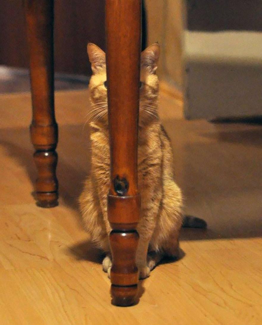 Katzensuchbild. Schwierigkeitsgrad: hoch!