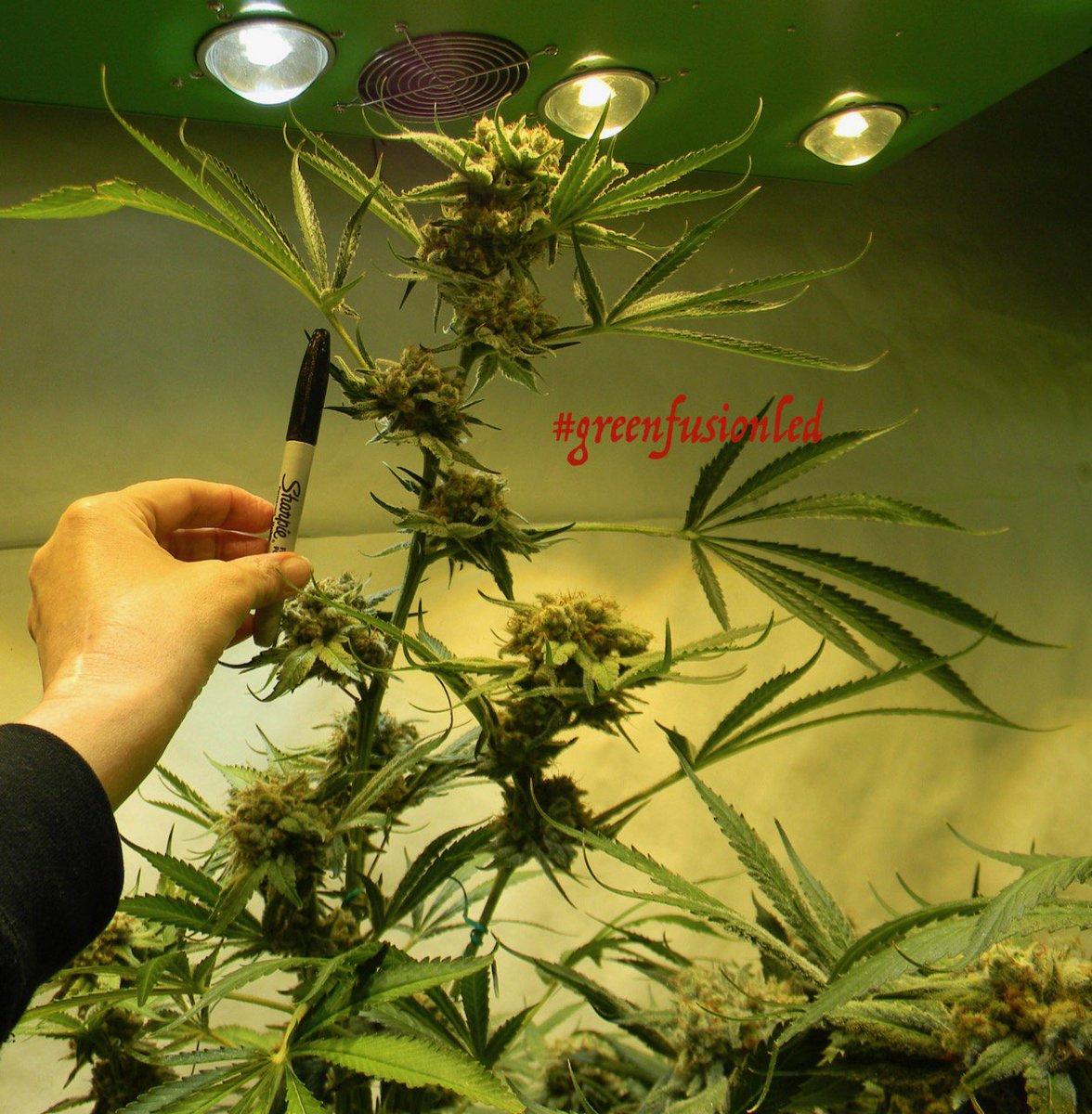 Cannabis-Dating