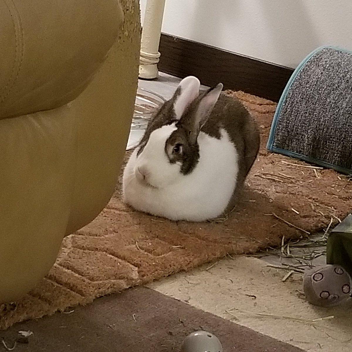 I have a strange loaf of bread in my living room. What should I do? #bunnyloaf