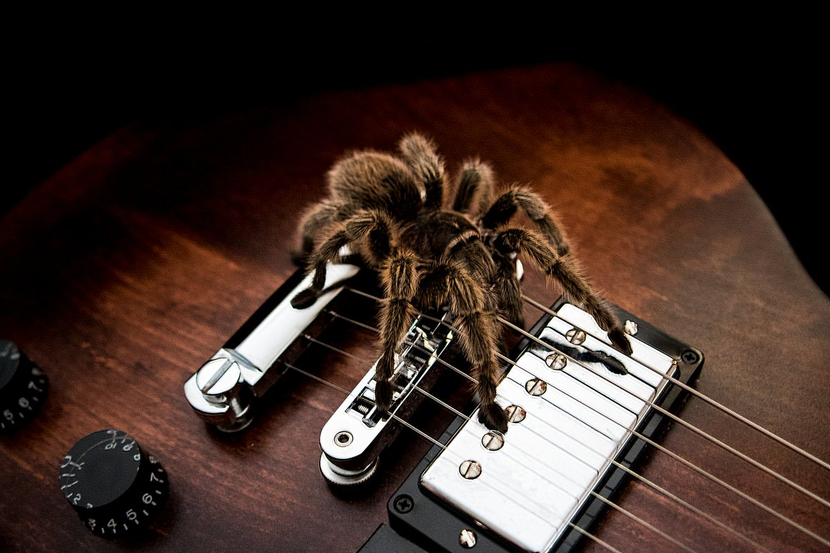 Beauty And Fear. An old re-edit of a picture I took about 3 years ago back when I keep pet spiders. #photography #photograph #photooftheday #photo #pic #picoftheday #insect #spider #guitar #lespaul
