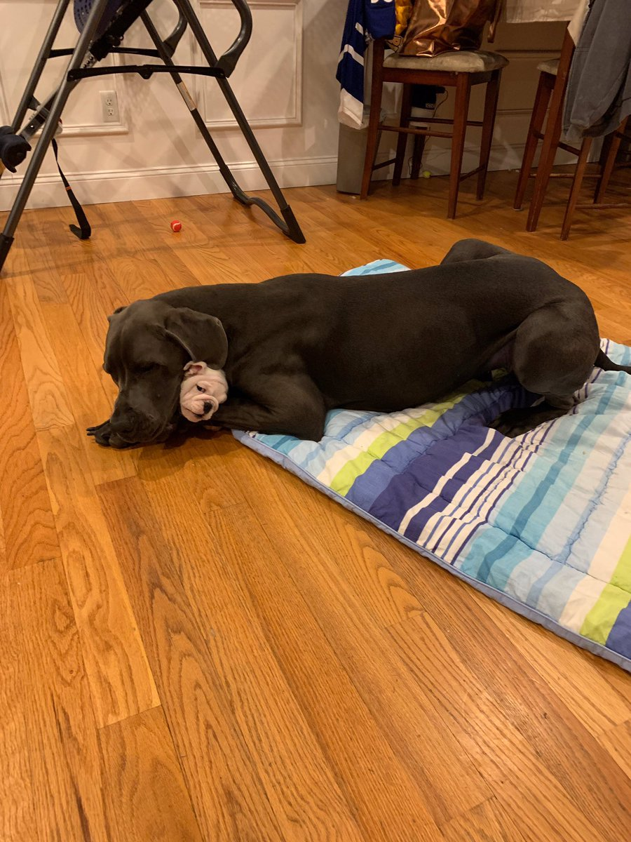 THE PHOTO MY SISTER JUST SENT ME OF HER GREAT DANE AND THE NEW PUPPY THEY JUST GOT.   LOOK AT IT.