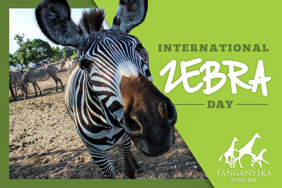 Happy #InternationalZebraDay — We love our sweet striped friends